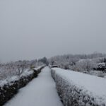 Winter_2021_01